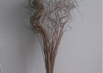 Trawa kręcona Ozdoba suszona wysokość 70 cm