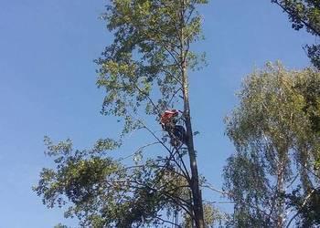 Wycinka pielęgnacja drzew, Frezowanie pni, Zrąbkowanie