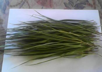 Sprzedam trawę żubrówkę