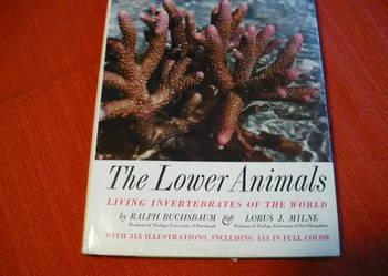 The Lower Animals