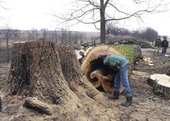 Wycinka, wycinanie drzew, wywóz gałęzi, usługi rębakiem