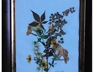Obraz ,suszone kwiaty i zioła,ręcznie robiony , zielnik