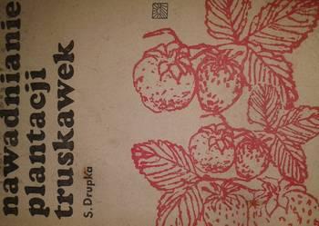 nawadnianie plantacji truskawek