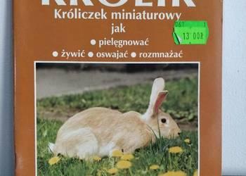 Książka, zwierzęta – Króliczek Miniaturowy
