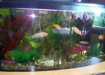 Akwarium 120 litrów osprzęt ryby