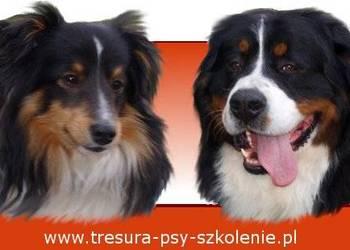 Profesjonalne szkolenie psa