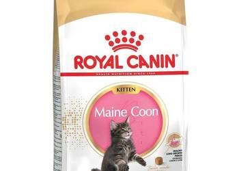 10kg Karma Royal Canin Maine Coon Kitten dla kota