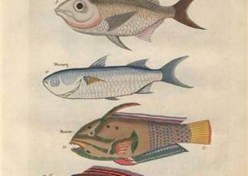 RYBY 1754 r.  reprint XVIII w. grafik do wystroju wnętrz