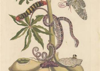 ZIELNIK  1719 -1734 r.  reprodukcje XVIII w.  40x30 cm