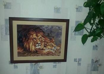 Obraz para lwów