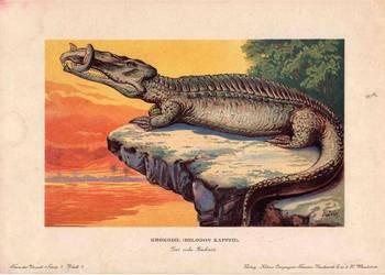 DINOZAURY  reprint XIX w. grafik do wystroju wnętrz