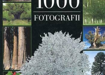 Drzewa 1000 fotografii