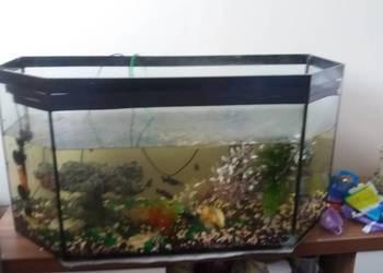 sprzedam rybki z akwarium