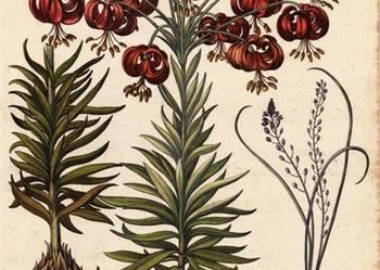 1713 r.  ZIELNIK  I  - KWIATY   reprodukcje  XVIII   grafik