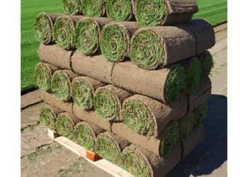trawa z rolki - producent Kętrzyn