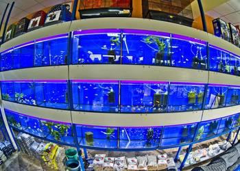 Neon Innesa - ryby, rośliny akwariowe Akwrystyczny Oświęcim