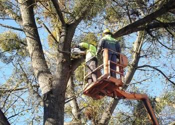 wycinka drzew Zawiercie Poręba Siewierz
