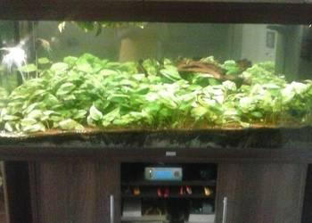 Akwarium Juwel Rio 450L