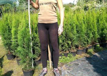 Thuja Smaragd tuja szmaragd 90-100 cm żywopłot