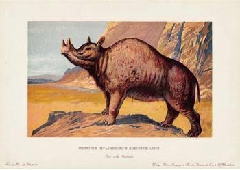 DINOZAURY     reprodukcje XIX w. grafik do wystroju wnętrz