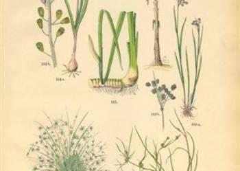 1885 r.  ZIELNIK III   reprodukcje XIX w. grafik do wystroju