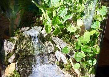 Florarium, las w słoiku, prezent
