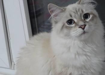 Przepiękne kotki syberyjskie Neva Masquerade WCF