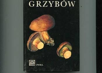 Mały atlas grzybów