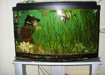 akwarium 120 litrów z rybami