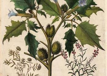 1713 r. ZIELNIK    reprodukcje XVIII w.   grafik do wystroju