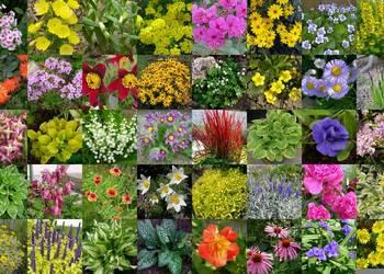 Rośliny ozdobne - Byliny 100 odmian (byliny,krzewy,zioła)