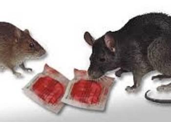 RATIMOR trutka na szczury i myszy 5 kg PASTA