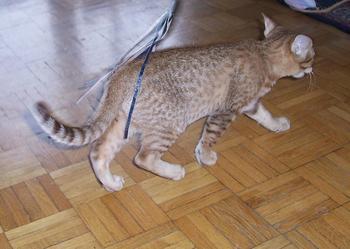 Kot Ocelot Sprzedajemypl