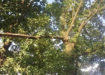 Wycinka drzew -usuwanie wiatrołomów