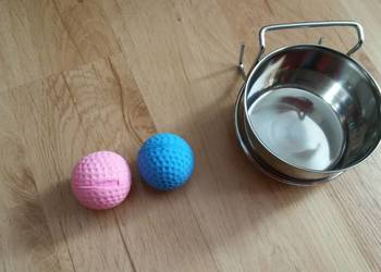 miska zawieszana dla psa czy kota z piłkami
