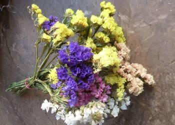 Kwiaty trawy ozdobne susz zatrwian złociszek krwawnik sorgo