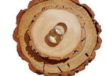 Plaster drewna dąb 14 - 17 cm obrączki poduszka
