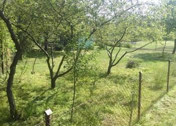 wykaszanie kosom spalinowa,wycinki drzew,krzewów rozbiórki