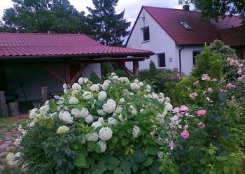 Dom w kwiatach i w otoczeniu starych drzew - w centrum wsi.