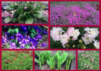 rośliny wieloletnie- sadzonki zamów już dziś cena od 1zł