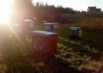 Sprzedam ule warszawskie poszerzane z pszczołami!
