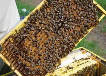 Odkłady Pszczele. Matki Pszczele.Pszczelarstwo. Pszczoły.